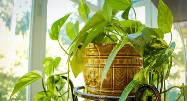 Zimmerpflanzen – mehr Harmonie für jeden Raum - Besser leben ...